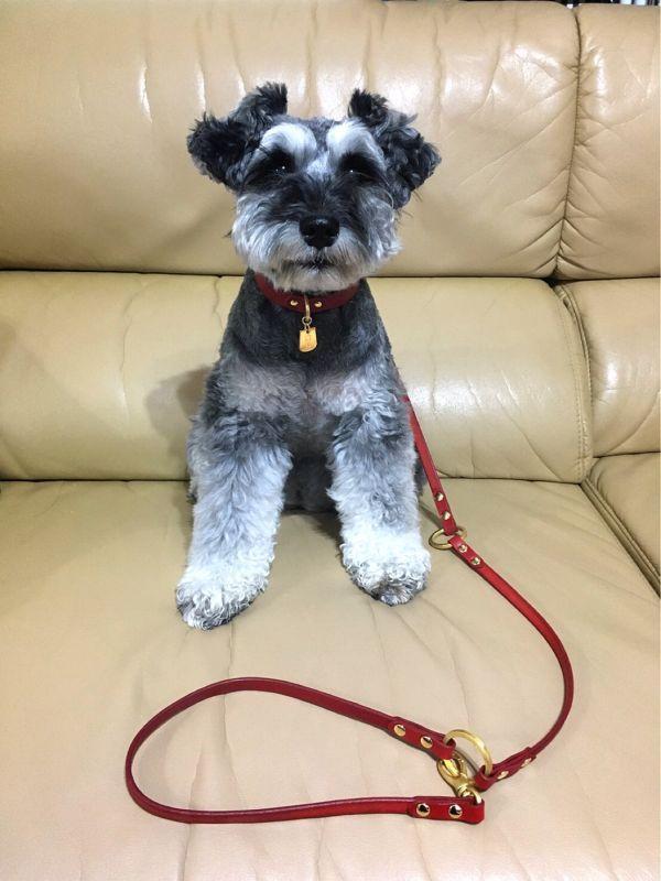 犬首輪専門店クリスタルポイント オリジナル犬首 …